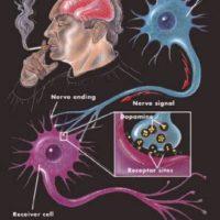 Cigi káros hatása, cigi szexualitás, dohányzás agyra memoriazavar, dohányzás káros egészségre, dohányzás leszokás