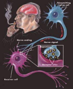 a dohányzás hatása az agyra)