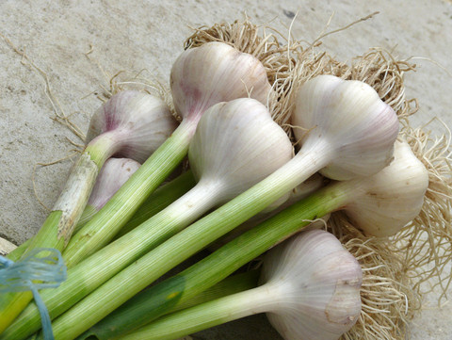 Fokhagyma javítja a koleszterinszintet, fokhagyma vérnyomás csökkentő, antioxidáns