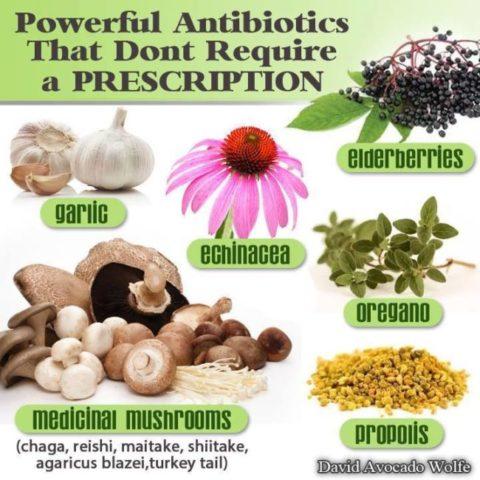 vírusellenes gyógynövények, természetes antibiotikum