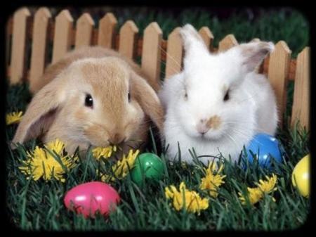 húsvét ünnepe, húsvétnapja, húsvéti locsoló versek,