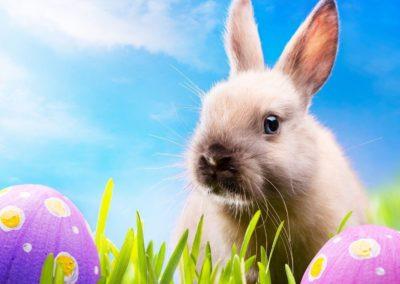 Húsvéti ünnepek, húsvéti képgaléria